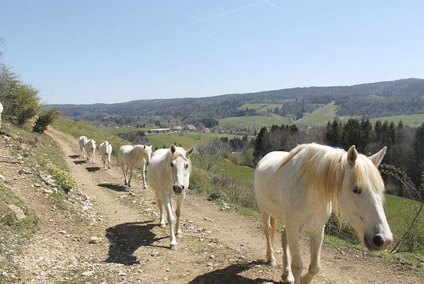 Vacances pour tous : colonie de vacances Randonnée cheval nature